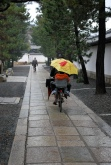 umbrella bike